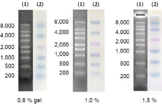 Figure 2 Electrophoresis profile of DynaMarker®  RNA High and DynaMarker® Prestain Marker for RNA High on 0.8 %, 1.0 % and 1.5 % agarose.- 2.2 M formaldehyde gel / 1x MOPS buffer as running buffer.