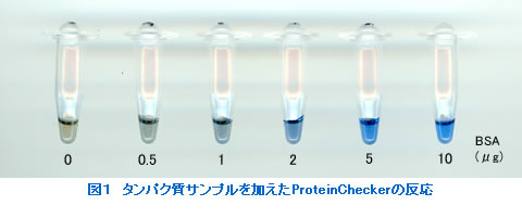 Fig. 1.  Coloring of ProteinChecker with the addition of protein